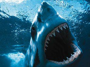 rekin zwierze drapiezne